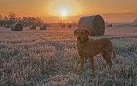 Dog at sunset wallpaper 2560x1600 jpg