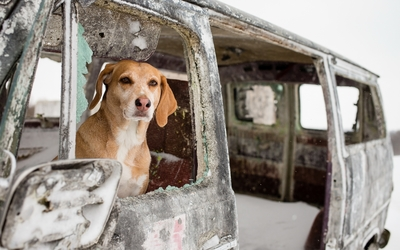 Dog in an abandoned car wallpaper