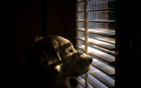 Dog looking out the window [2] wallpaper 2560x1600 jpg