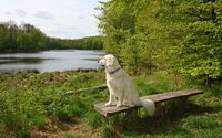 Dog on a bench wallpaper 2560x1600 jpg