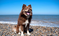 Dog on the beach wallpaper 2560x1600 jpg