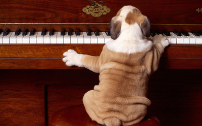 Dog playing the piano wallpaper