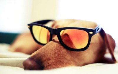 Dog sleeping with sunglasses wallpaper