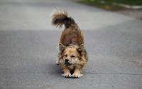 Dog stretching wallpaper 2560x1600 jpg