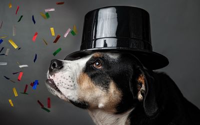 Dog with a hat celebrating wallpaper