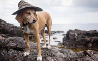 Dog with a hat on a rock wallpaper 2560x1600 jpg