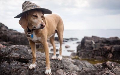 Dog with a hat on a rock wallpaper