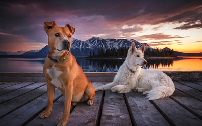 Dogs on a wooden pier wallpaper