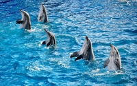 Dolphins in show wallpaper 1920x1200 jpg
