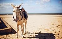 Donkey wallpaper 1920x1200 jpg