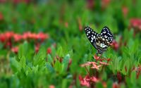 Dotted butterfly wallpaper 1920x1200 jpg