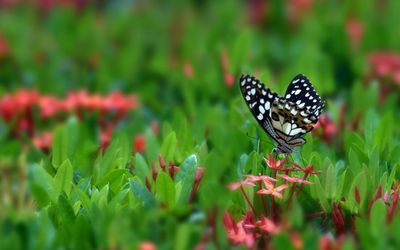Dotted butterfly wallpaper