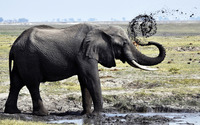 Elephant [3] wallpaper 1920x1200 jpg