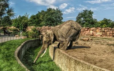 Elephant [8] wallpaper