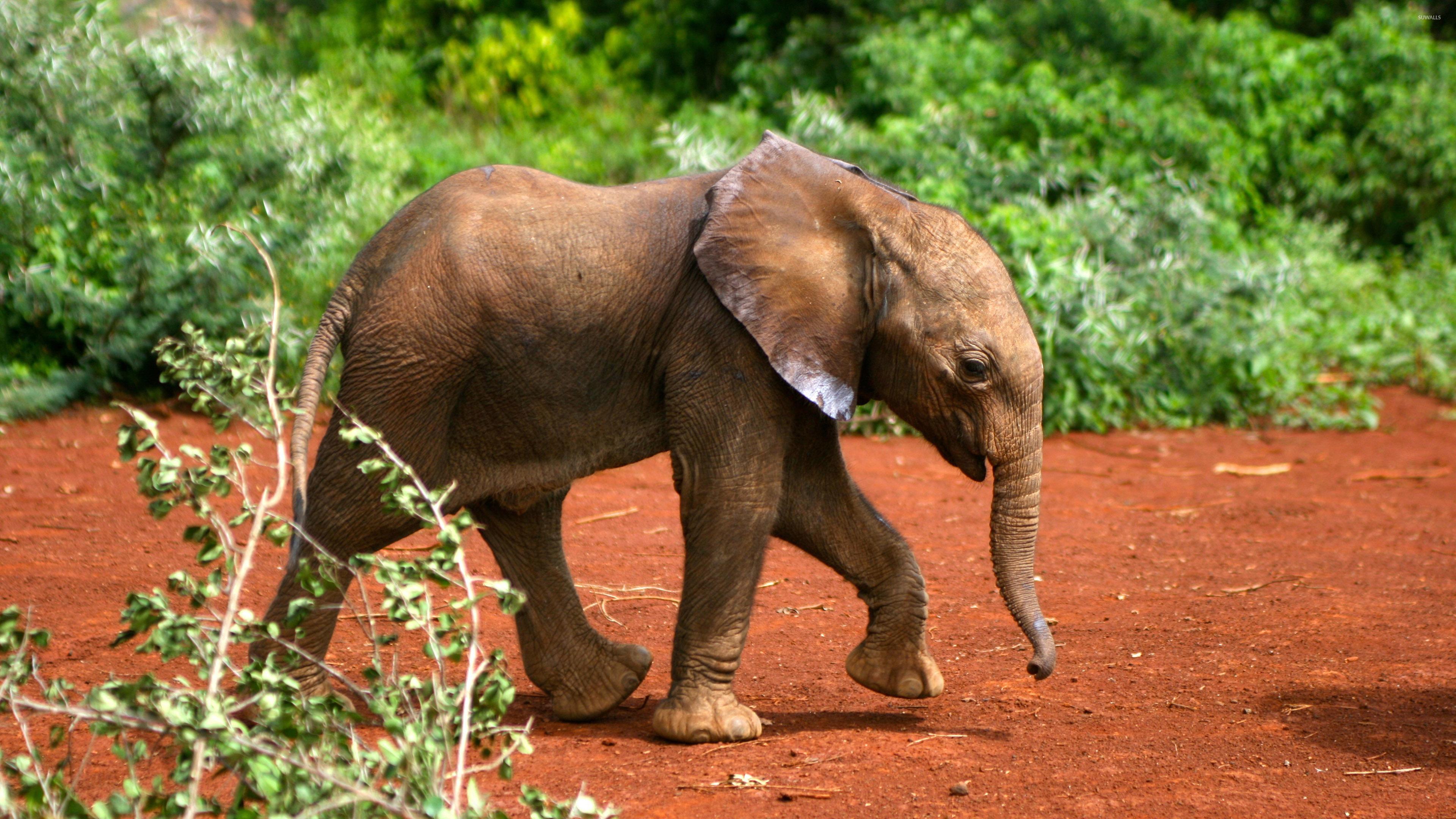 слон в воде анонимно