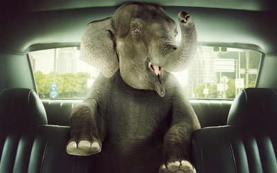 Elephant in a car wallpaper