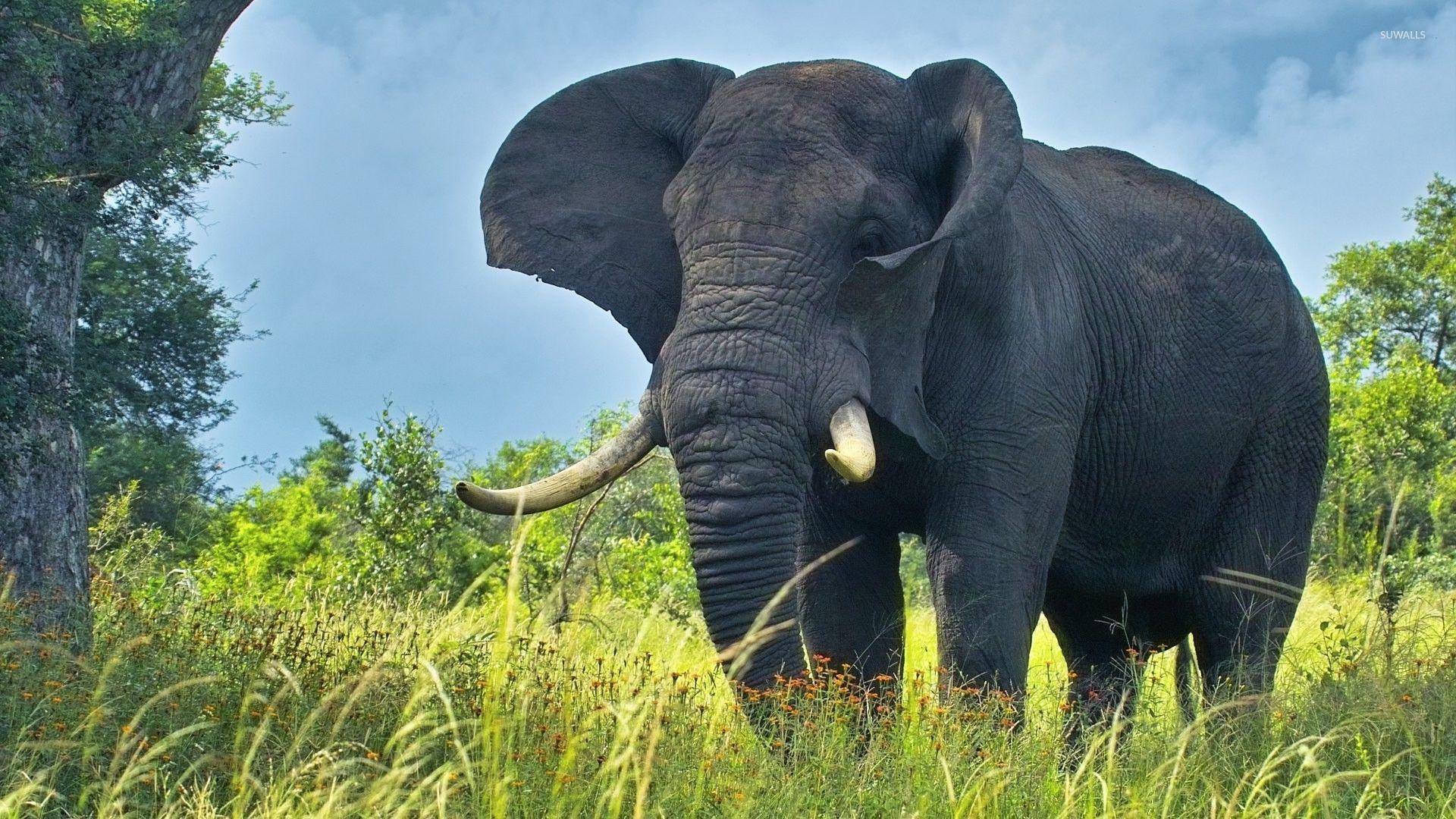 Wallpaper download elephant - Elephant Under A Tree Wallpaper