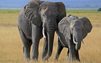 Elephant with its calf wallpaper 2880x1800 jpg