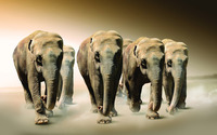 Elephants [4] wallpaper 1920x1200 jpg
