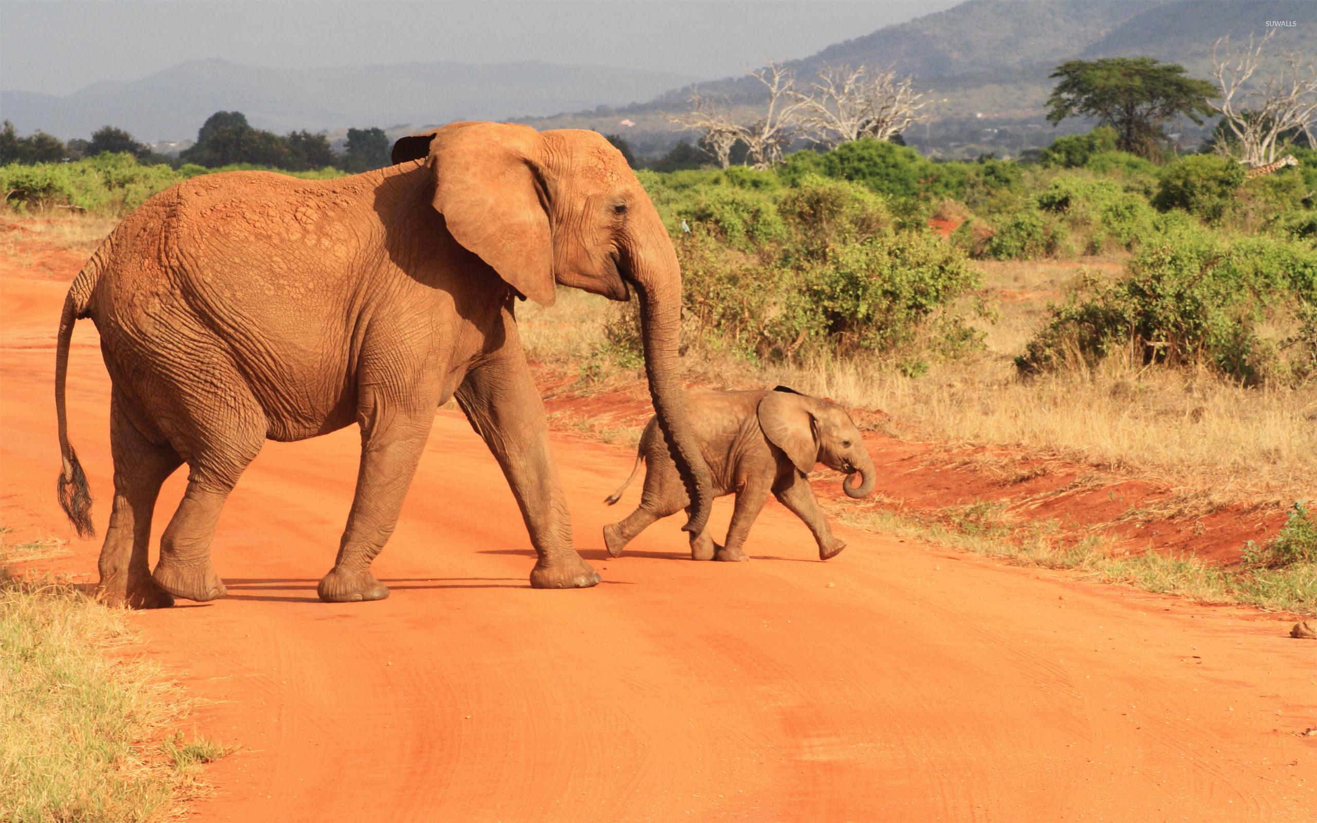 Elephants Animal Animals Calf: Elephants [6] Wallpaper