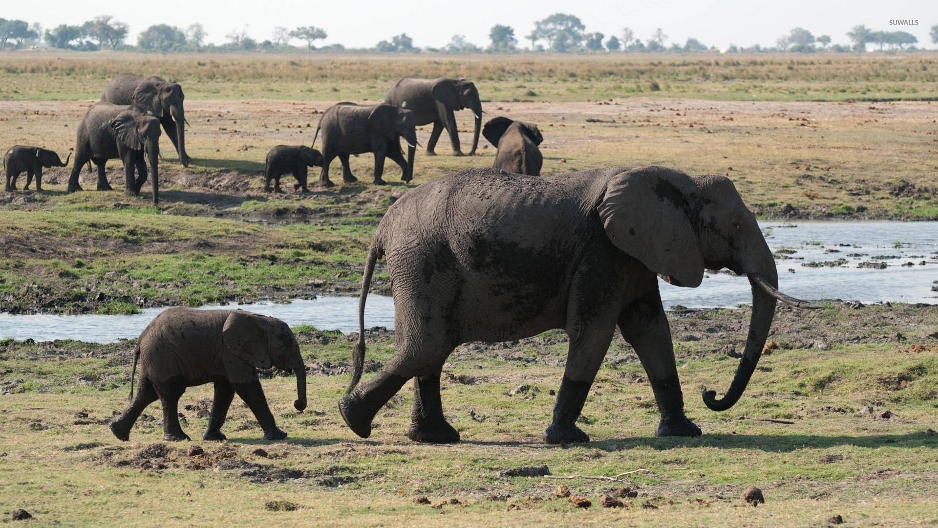 Elephants Animal Animals Calf