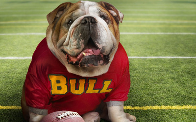 English Bulldog [3] wallpaper
