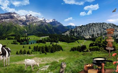Farm animals on the mountain meadow wallpaper