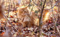 Fluffy cat [3] wallpaper 1920x1200 jpg