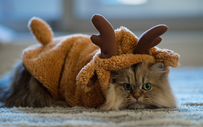 Fluffy cat in a reindeer costume wallpaper