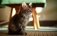 Fluffy kitten wallpaper 1920x1200 jpg