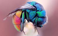 Fly wallpaper 2880x1800 jpg