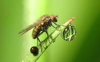 Fly [3] wallpaper 2560x1600 jpg
