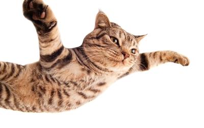 Flying cat wallpaper