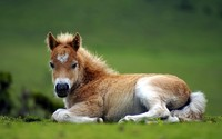 Foal wallpaper 2560x1600 jpg