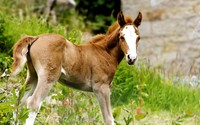 Foal [2] wallpaper 2560x1600 jpg