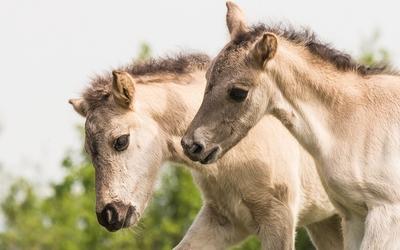 Foals wallpaper