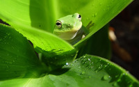 Frog wallpaper 1920x1200 jpg
