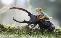 Frog on a beetle wallpaper 1920x1200 jpg