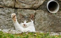 Funny cat [2] wallpaper 1920x1200 jpg