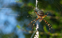 Garden spider wallpaper 2560x1600 jpg