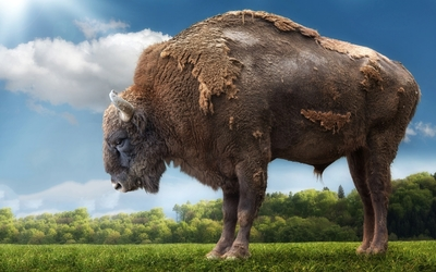 Giant bison wallpaper