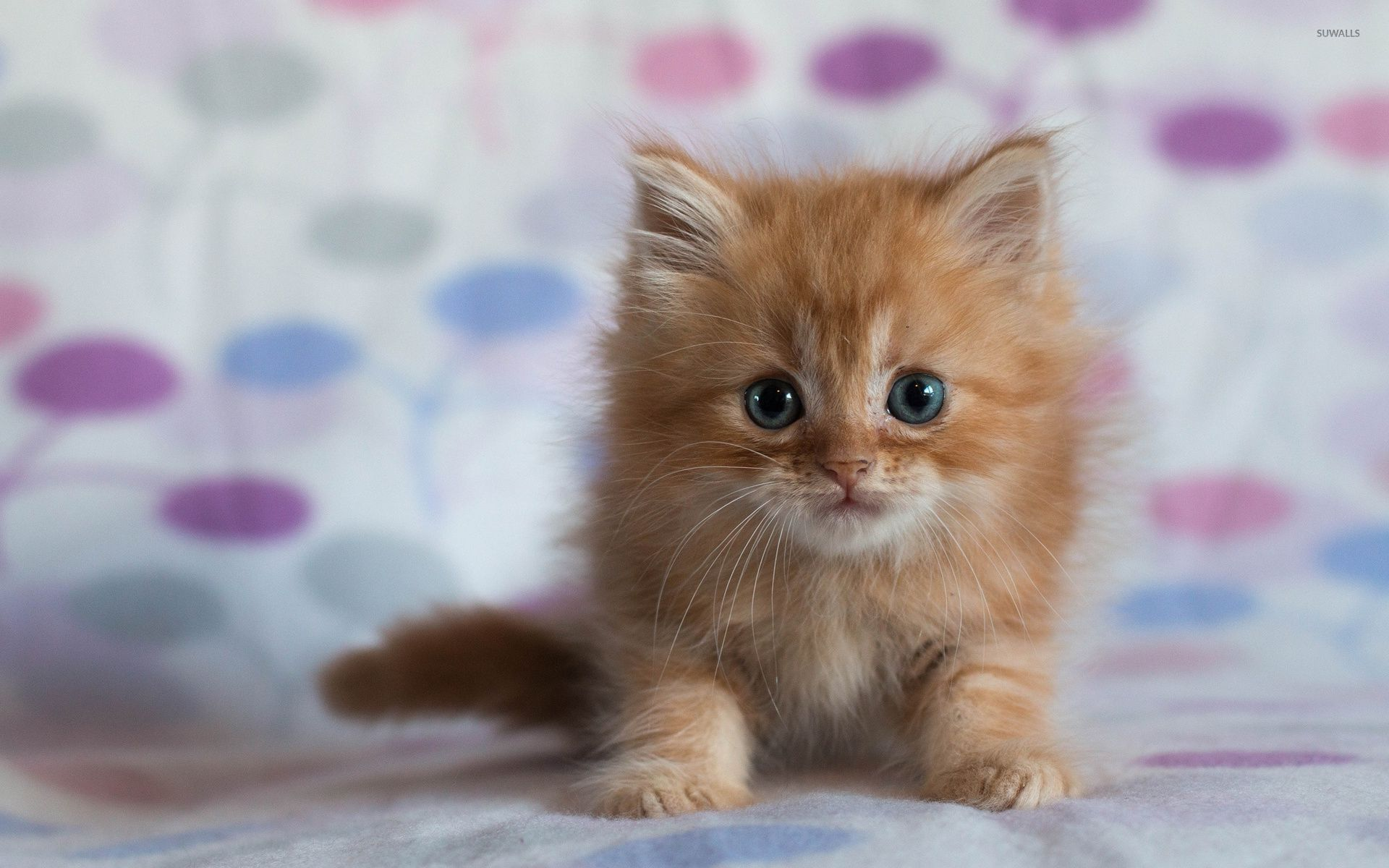 Ginger kitten wallpaper