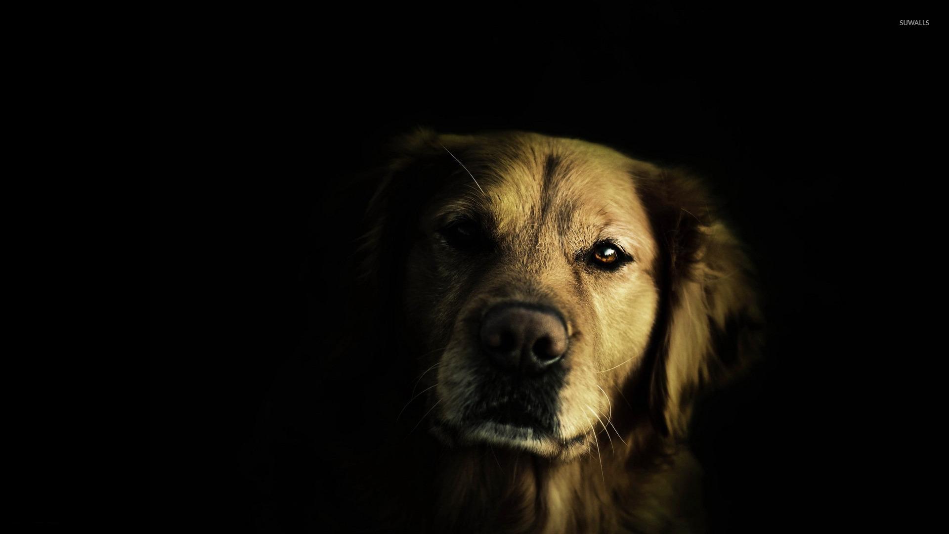 Minecraft Pet Dog Dark