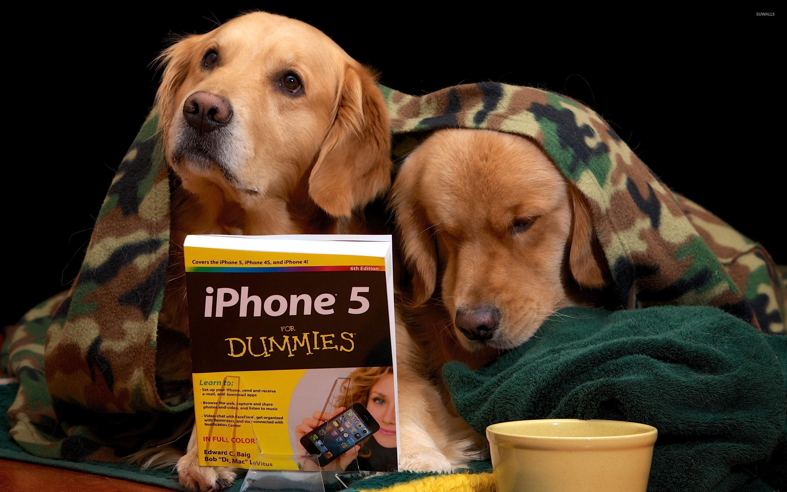 Golden Retriever Puppies Learning Wallpaper Animal