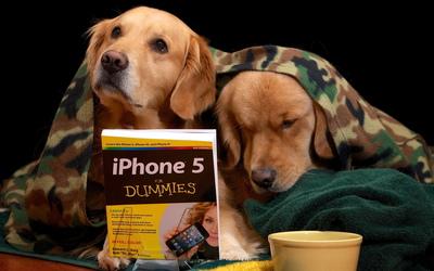 Golden Retriever puppies learning wallpaper