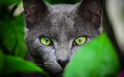 Gray cat hidding wallpaper