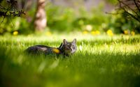 Gray cat hiding in the grass wallpaper 1920x1080 jpg