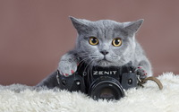 Gray cat with a Zenit camera wallpaper 2560x1600 jpg