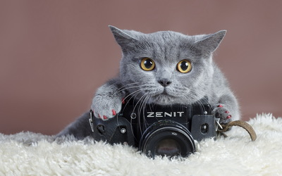 Gray cat with a Zenit camera wallpaper