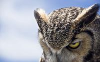 Great Horned Owl wallpaper 2560x1600 jpg